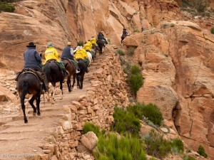 Mules and riders heading up the trail