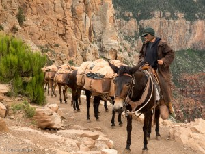 Pack mules heading up. The trip down started at 3:00 am that morning.
