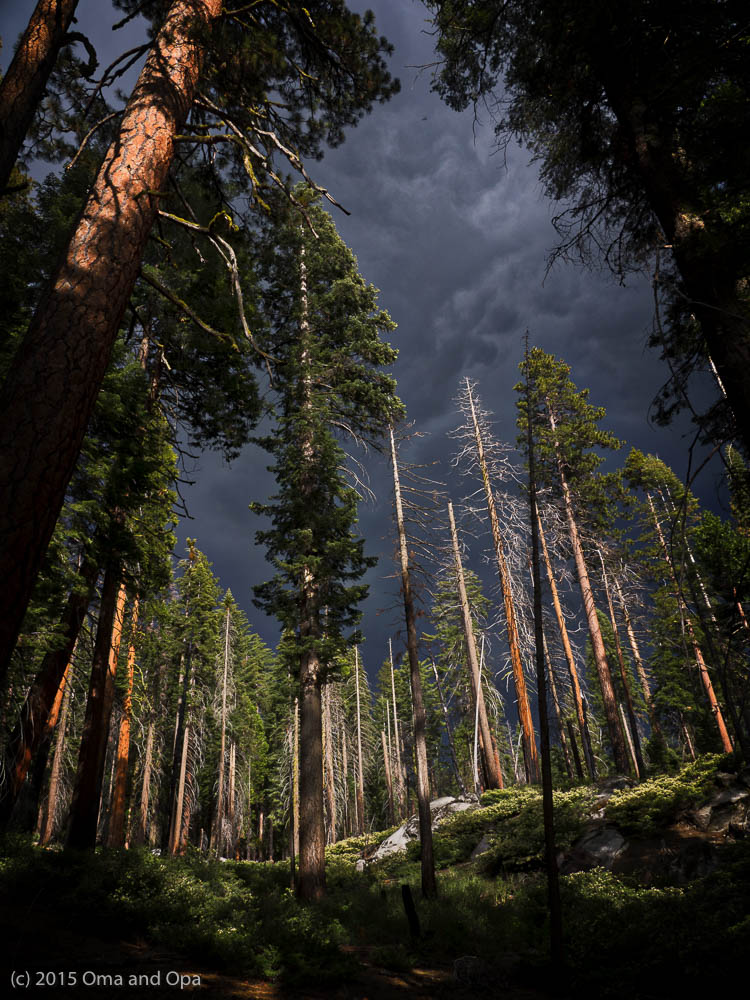 The gathering storm convinced us to turn around and head back to the Mariposa Grove parking lot.