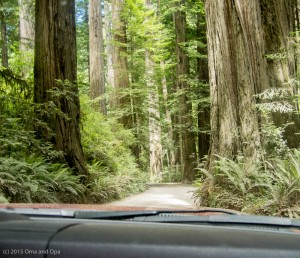 The road through the redwood forest was barely wide enough for the truck in several places