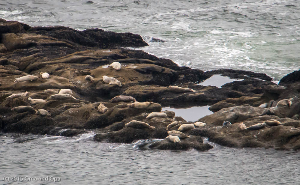 Seals on the rocks offshore Yaquina Head Outstanding Natural Area