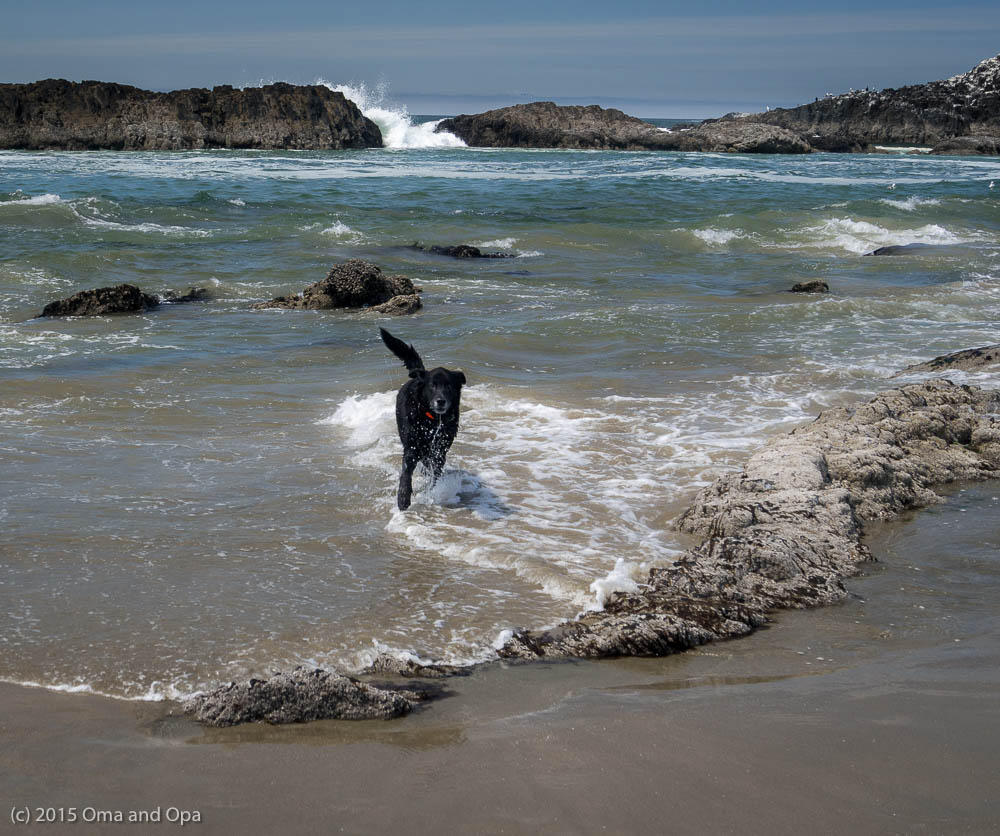 Coda loved his beach runs