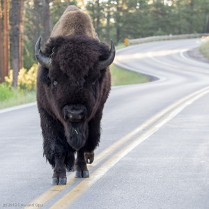 Buffalo have the right-of-way