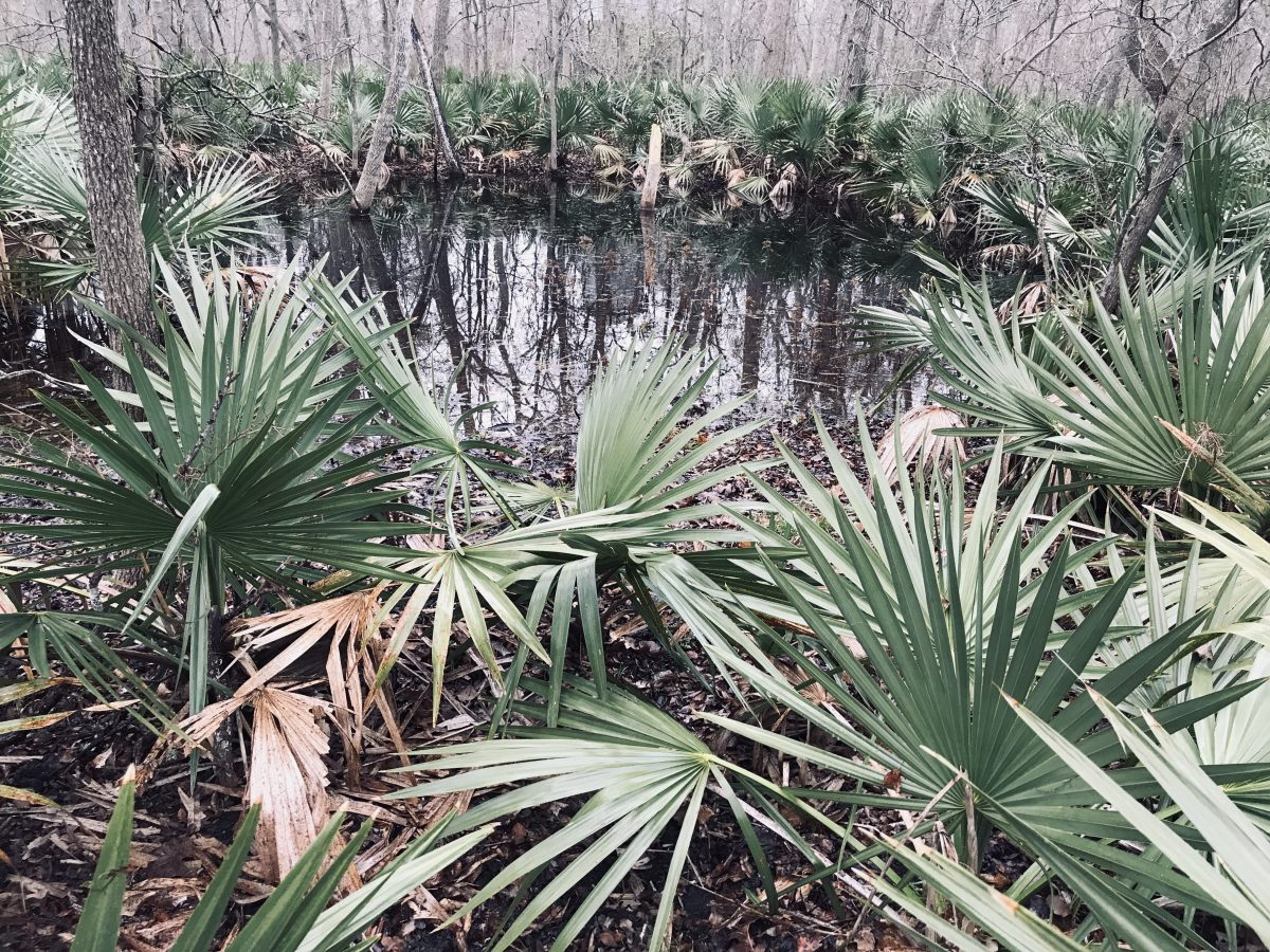 Palmetto State Park – January 2019 and January 2020