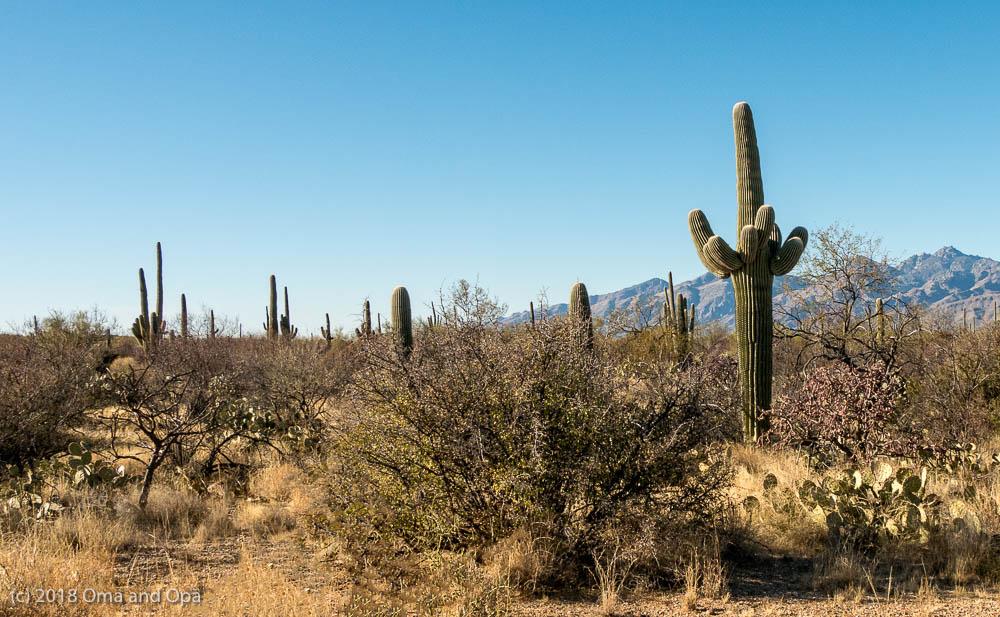 Finally Warmth & Sun – Tucson January 2018